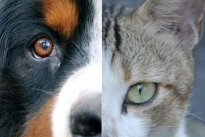 Mascotas, divorcio y visitas